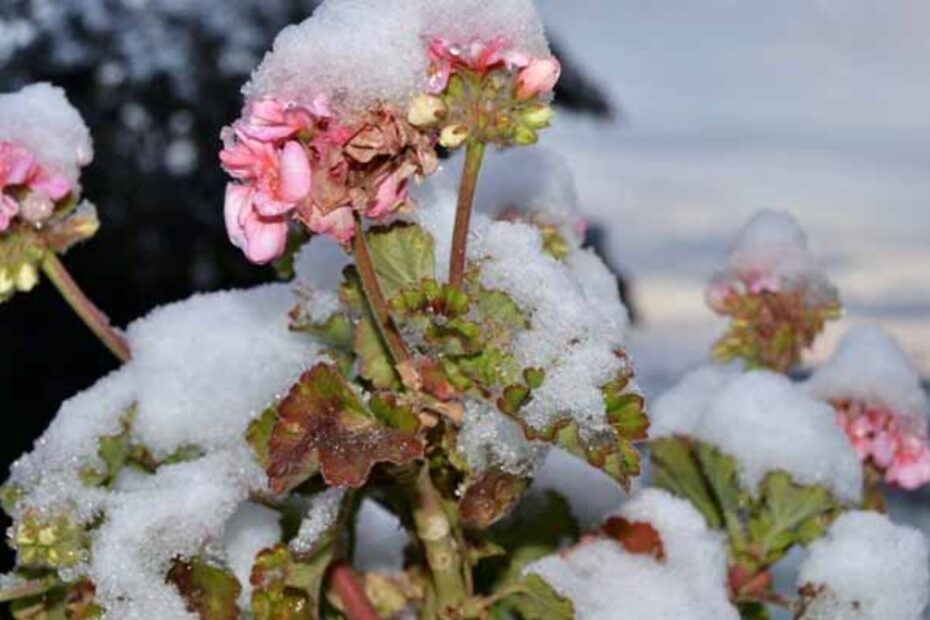 Sfaturi despre pastrarea muscatelor pe timpul iernii