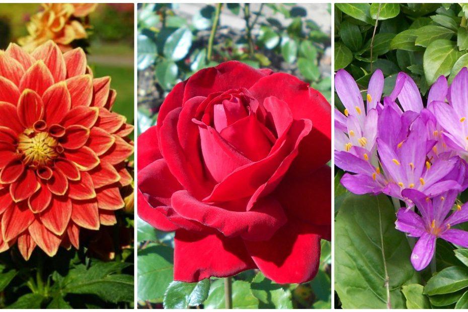 9 flori care infloresc toamna in orice gradina