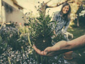 gradinarit, flori