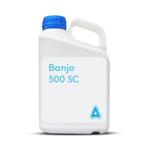 Banjo 500 SC