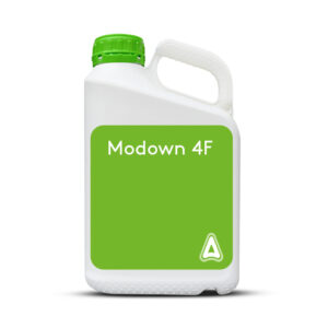 Modown 4 F